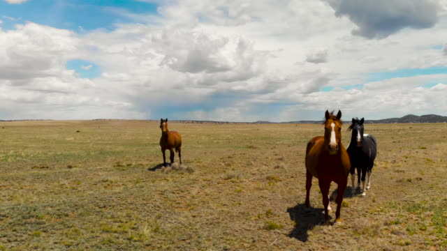 wild horses in open spaces - new mexico stock videos & royalty-free footage