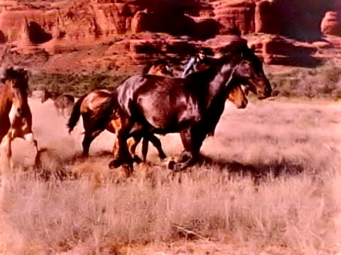 wild horses in slow motion - wyoming ranch stock videos & royalty-free footage