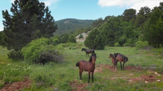 Wild Horses in Spil Mountain National Park, Manisa, Turkey