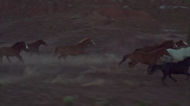 wild horses kick up dirt as they stampede across a desert. - gallop animal gait stock videos & royalty-free footage
