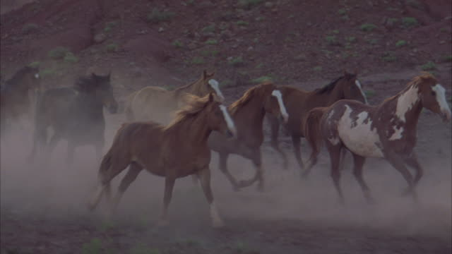 Wild horses kick up dirt as they stampede across a desert.
