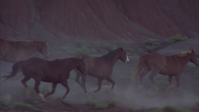 wild horses kick up dirt as they stampede across a desert. - stampeding stock videos & royalty-free footage