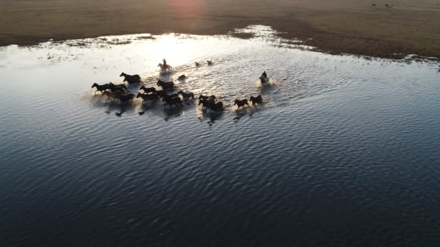 wild horses of anatolia aerial view - animals in the wild stock videos & royalty-free footage