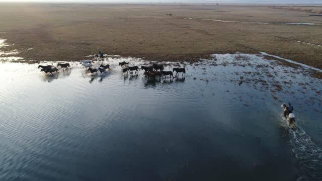Vista aérea de salvajes caballos de Anatolia