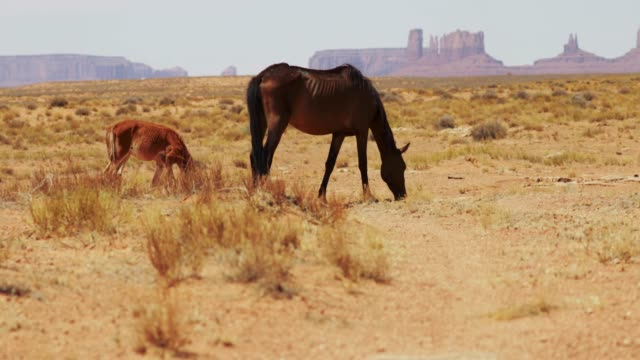 wild horses of the monument valley - native american reservation stock videos & royalty-free footage