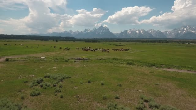 wild horses pull away drone aerial 4k, alpine, american west, grand tetons national park, jackson hole, mountains, nature, outdoors, rocky mountains, scenic, teton range, tetons, wilderness, wildlife, wyoming.mov - 雄馬点の映像素材/bロール