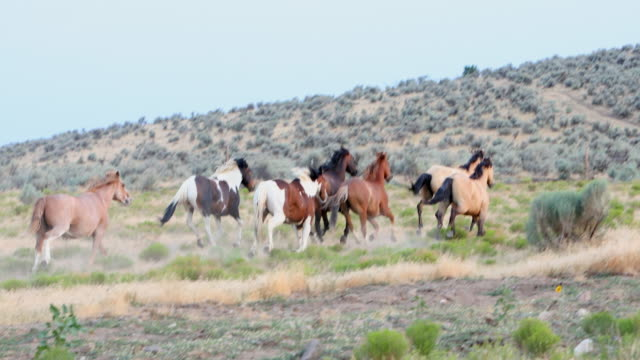 wild horses running across a field - toughness stock videos and b-roll footage
