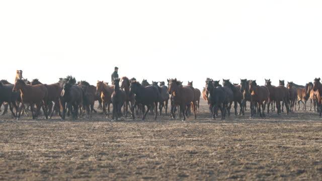 vídeos y material grabado en eventos de stock de caballos salvajes corriendo en montaña - galopar
