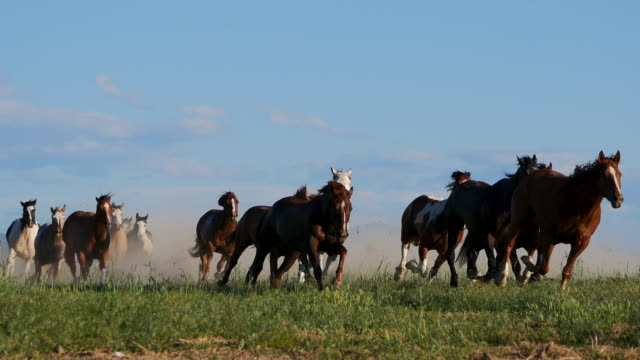 wild horses running in nature in america - autorità video stock e b–roll