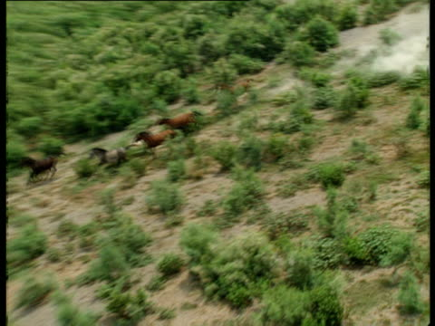 aerial ws ts wild horses running through woodland, acre, galilee, israel - akko stock videos and b-roll footage