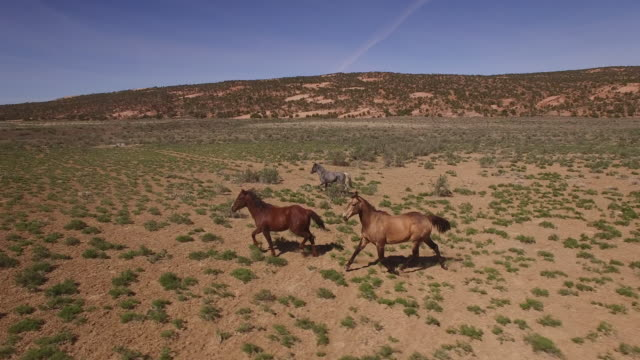 wild horses side tracking 4k, drone aerial view of wild horses grazing and running near the grand canyon close to the arizona utah border - small group of animals stock videos & royalty-free footage