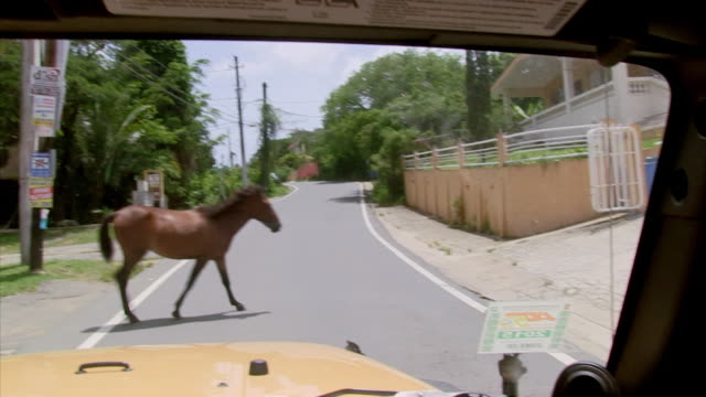 wild horses stroll leisurely across a road in a village on vieques, an island off the coast of puerto rico, where they roam freely. - puerto rico stock videos and b-roll footage