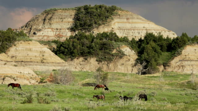 Wild horses Theodore Roosevelt National Park Bandlands North Dakota