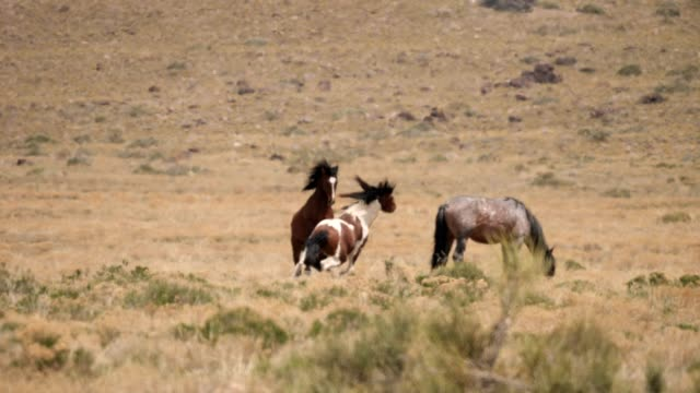 wild horses - animals in the wild stock videos & royalty-free footage