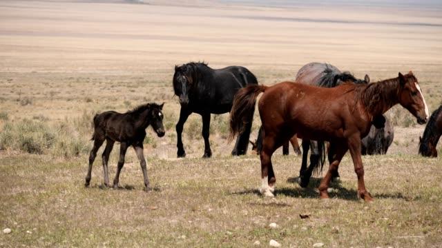 野生の馬 - 雄馬点の映像素材/bロール