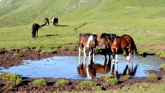 wild horses (hd) - pond stock videos & royalty-free footage