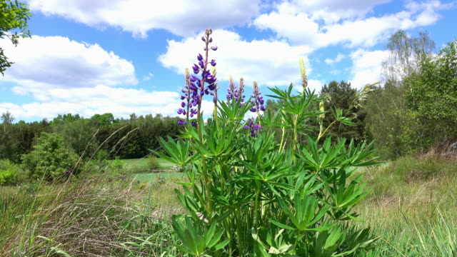 wild hyacinth - hyacinth stock videos & royalty-free footage