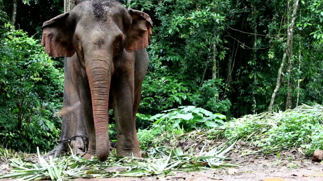 wild life big elephant stand alone in tropical deep forest - animal wildlife stock videos & royalty-free footage