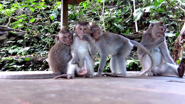 Wild Macaque Monkey (Macaca fascicularis) Family Surprise