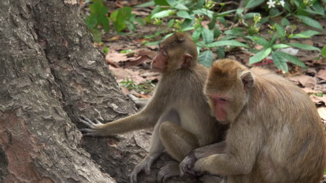 Wild Monkeys In The Forest