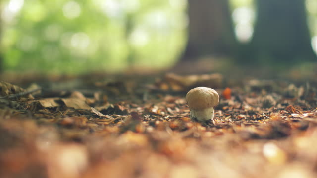 wild mushrooms in sunny forest - autumn stock videos & royalty-free footage