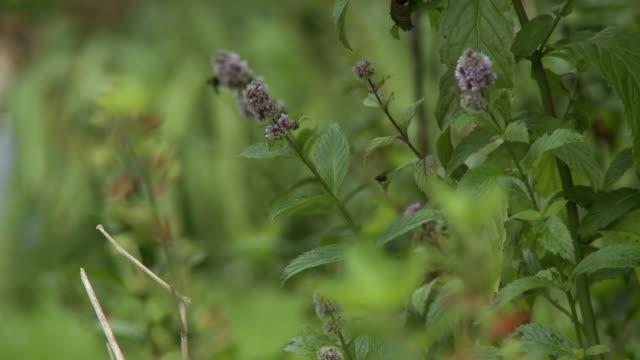 wild perennial flower - perennial stock videos & royalty-free footage