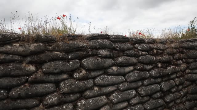 wild poppies blow in the wind in the 'trench of death' a preserved belgian world war one trench system on july 14 2017 in diksmuide belgium - trench stock videos and b-roll footage