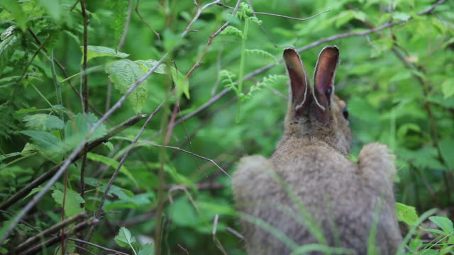 Wild rabbit on forest floor, close up