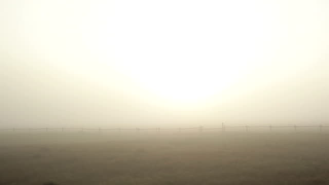 Wild Rural Foggy Winter Morning Driving with the Sun
