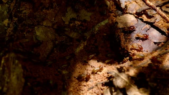 stockvideo's en b-roll-footage met wild termites - dierenhol
