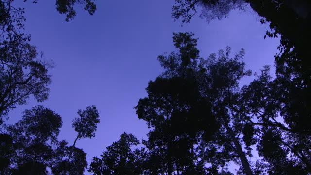 wild trees at dusk - time lapse - 木立点の映像素材/bロール