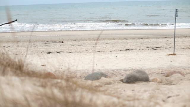 Wild uncultivated beach