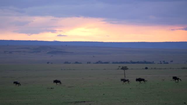 ヌーでマサイマラ,ケニア