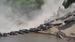 Wildebeest  great migration crossing the Mara River in Kenya