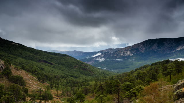 time lapse: wilderness area - wilderness area stock videos & royalty-free footage
