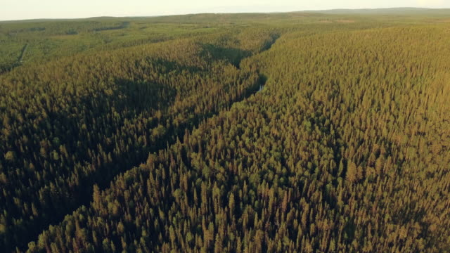 wilderness forest and river in finland - named wilderness area stock videos & royalty-free footage