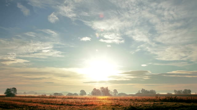 hd - wilderness in the morning - open field stock videos & royalty-free footage