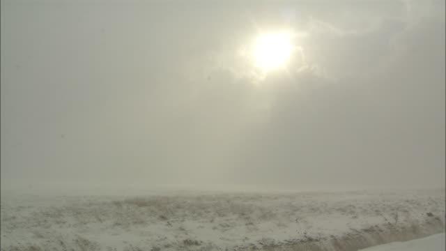 wilderness of sarobetsu in snowstorm - wilderness stock videos & royalty-free footage