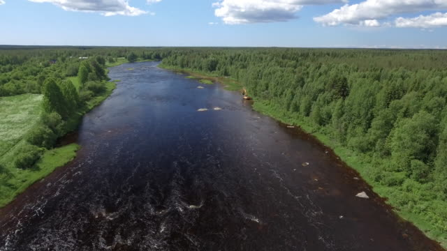 wilderness river in scandinavia - pine woodland stock videos & royalty-free footage