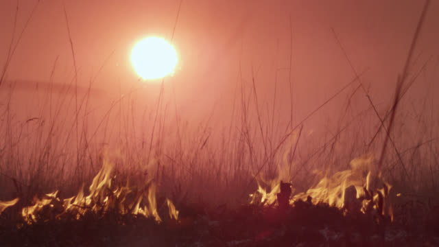 vidéos et rushes de wildfire burns on savannah at sunset, zambia - burning