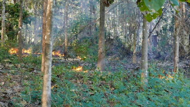 vídeos de stock e filmes b-roll de wildfire loop hd - lamaçal