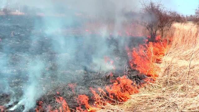 wildfire in bush - gröda bildbanksvideor och videomaterial från bakom kulisserna