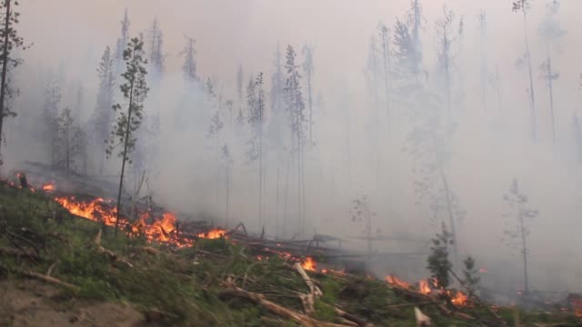 wildfire on hillside - vancouver canada stock videos & royalty-free footage
