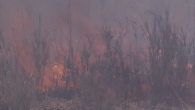 a wildfire rages in the grass on the savanna. available in hd. - hd format stock videos & royalty-free footage