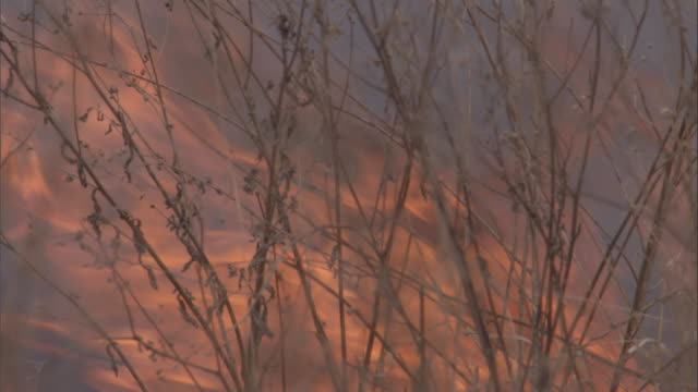 a wildfire rages in the savanna. available in hd. - hd format stock videos & royalty-free footage