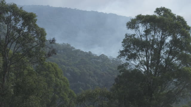 stockvideo's en b-roll-footage met ms wildfire smoke over forest / victoria, australia   - wildernis