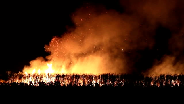 wildfire - burnt stock videos & royalty-free footage