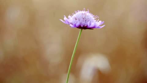 wildflower in summer breeze - single flower stock videos & royalty-free footage