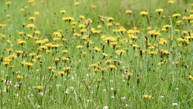wildflower meadow in summer - david johnson stock videos & royalty-free footage