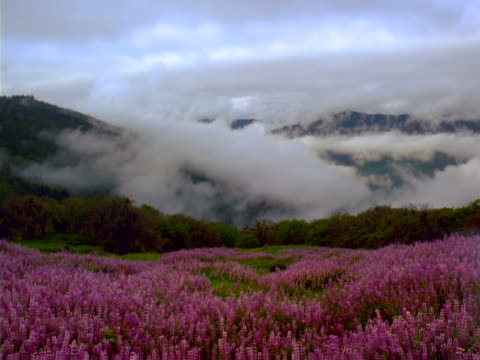 wildflowers and clouds - alm stock-videos und b-roll-filmmaterial